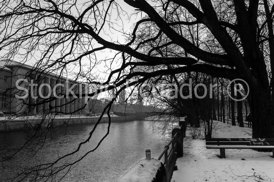 Invierno En Blanco Y Negro Stockipic Compra Y Vende Fotos De